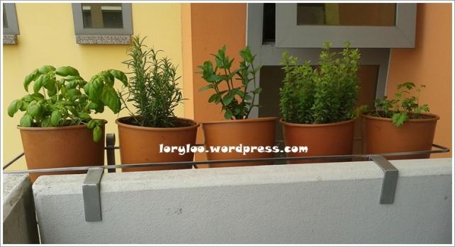 Plante aromatice crescute in balcon