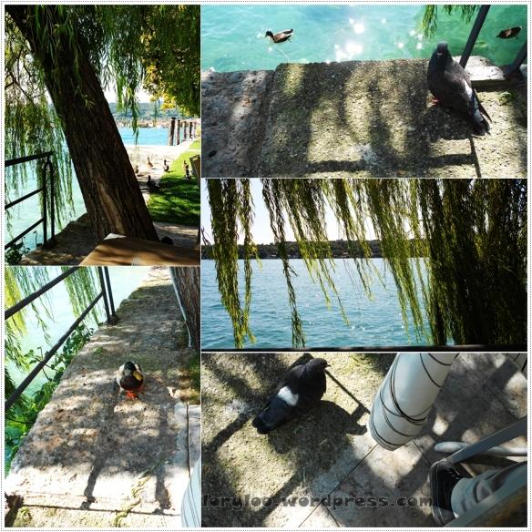 Lago di Garda - Garda Lake - Salo (1)