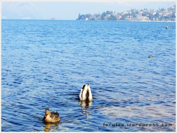 Lago di Garda - Malcesine  (3)